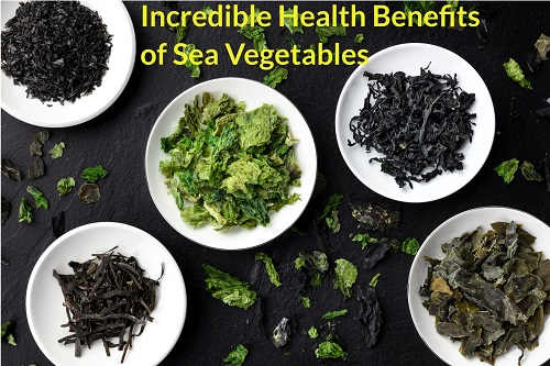 Incredible Health Benefits of Sea Vegetables