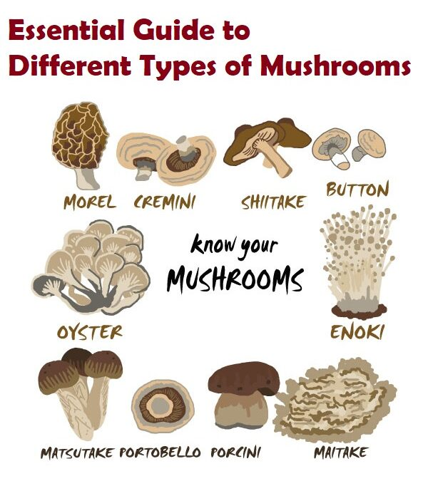 Essential Guide to Different Types of Mushrooms